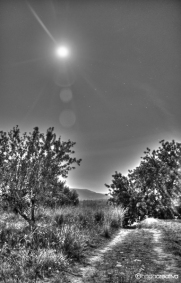 Nocturna 8