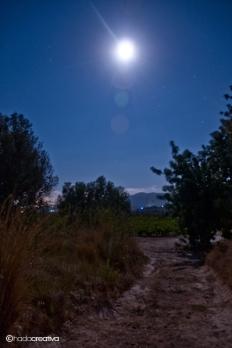 Nocturna 11