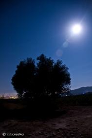 Nocturna 9